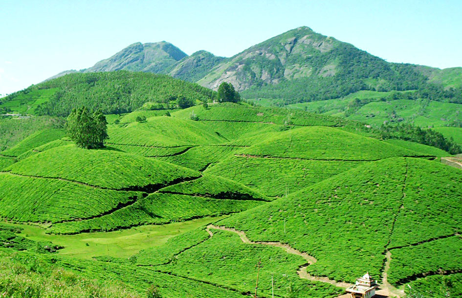 Mg Tours Munnar Packages Kerala Packages South India Packages House Boating Trekkings